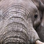 Elephant Sands Lodge Botswana