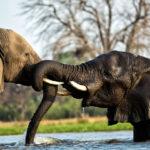 Machaba Luxury Safari Lodge and Camp  Botswana