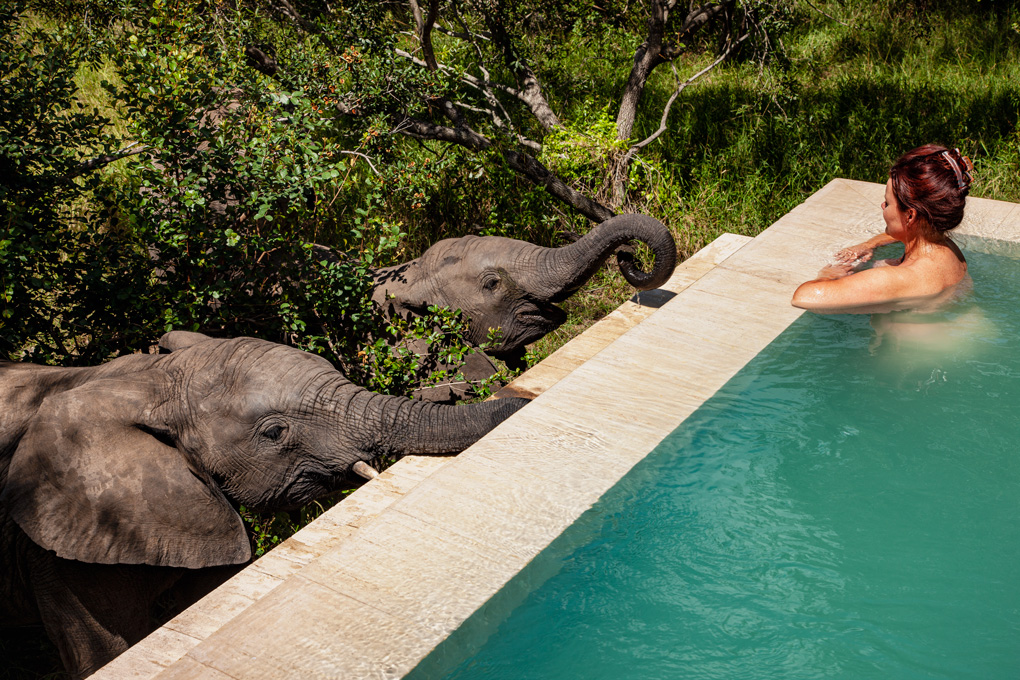 Elephant interaction at Royal Malewane Lodge,South Africa