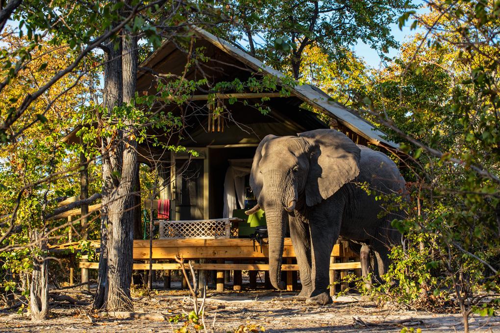 Safari Tent, Hyena Pan, Botswana